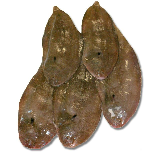 Dover sole products netherlands dover sole supplier for Dover sole fish