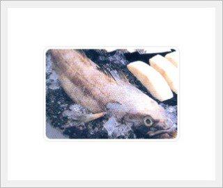 Mero' Story  Fish