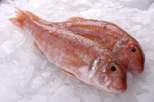 Mullet fisch