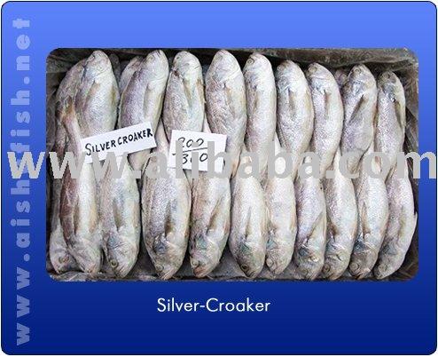 Silver Fresh Croaker Fish Productsindia Silver Fresh