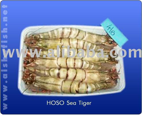 SEA   TIGER   SHRIMP S
