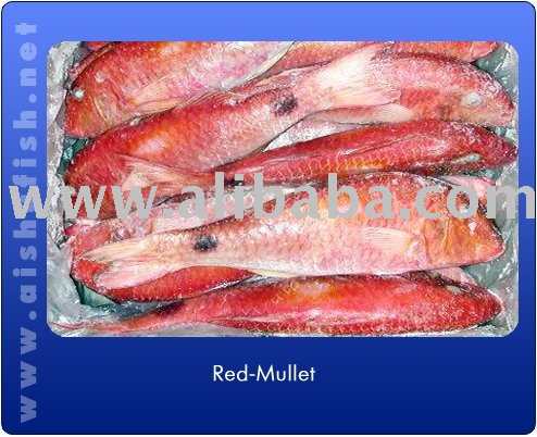 Mullet fish egg products south africa mullet fish egg supplier for Red mullet fish