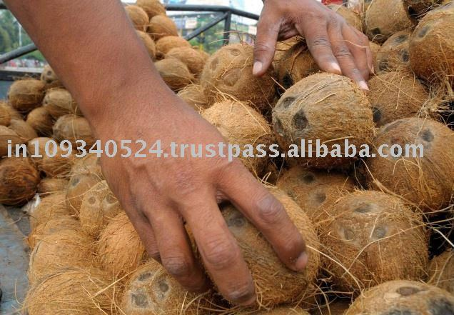 Coconut fresh for exports