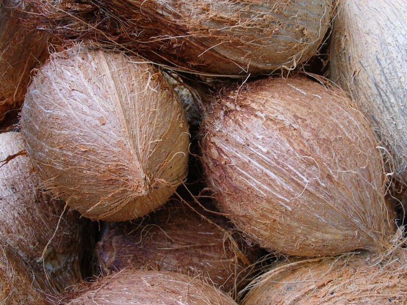 Fresh Coconut/ King Coconut