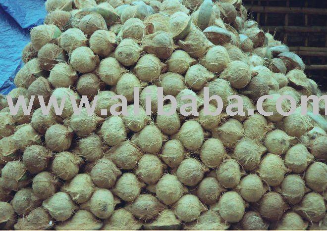Fresh Coconut Mature
