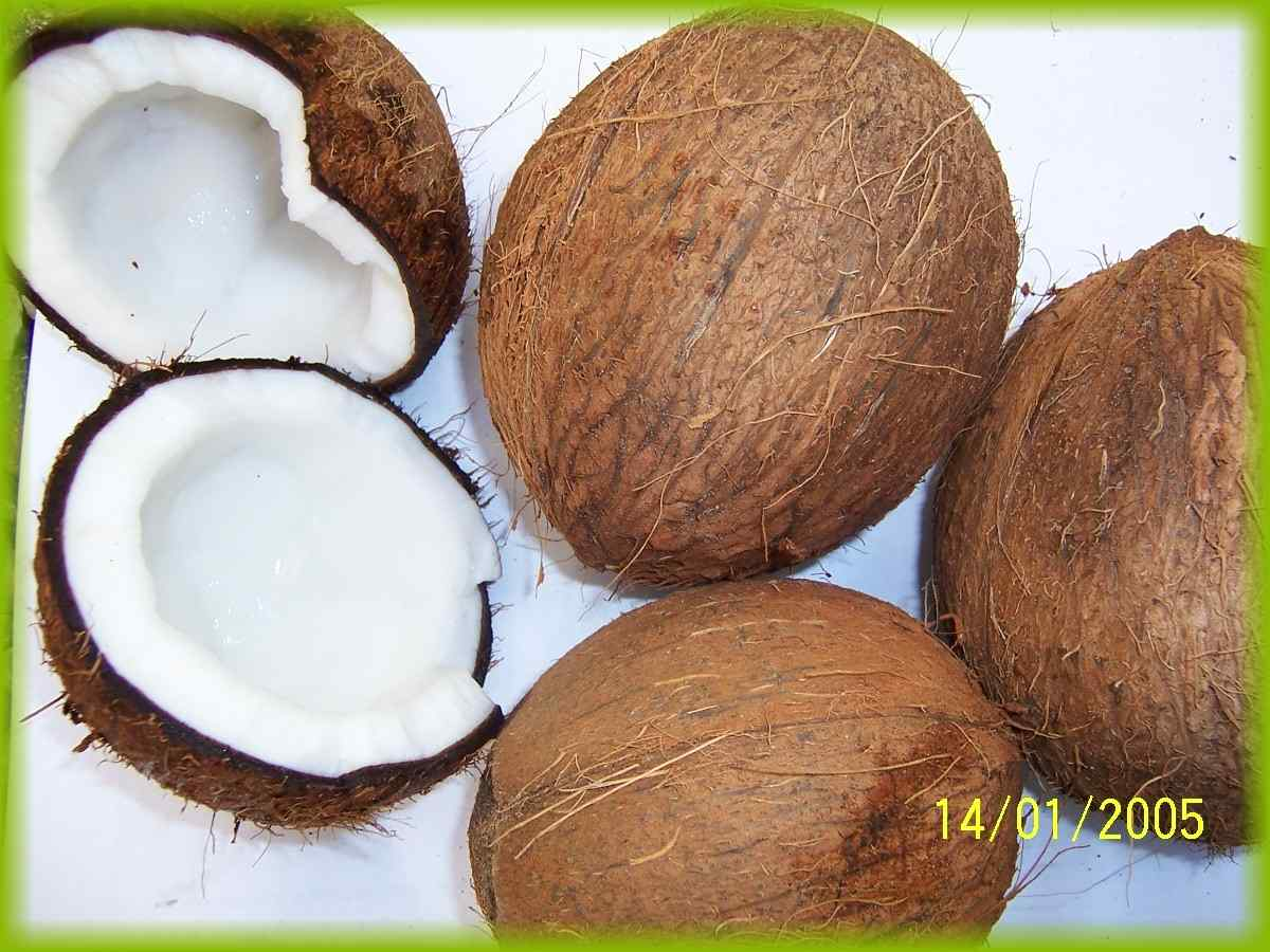 Coconut Shell Products India Coconut Shell Supplier