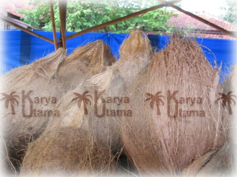 Husked Mature Coconut