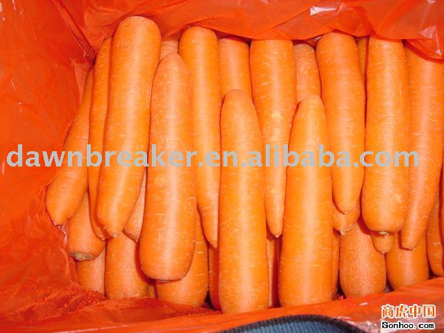 Carrot ( fresh carrot / red carrot )