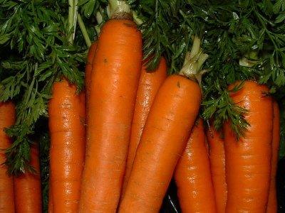 Fresh Carrot Carrot