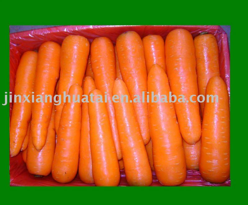 chinese new crops fresh carrot