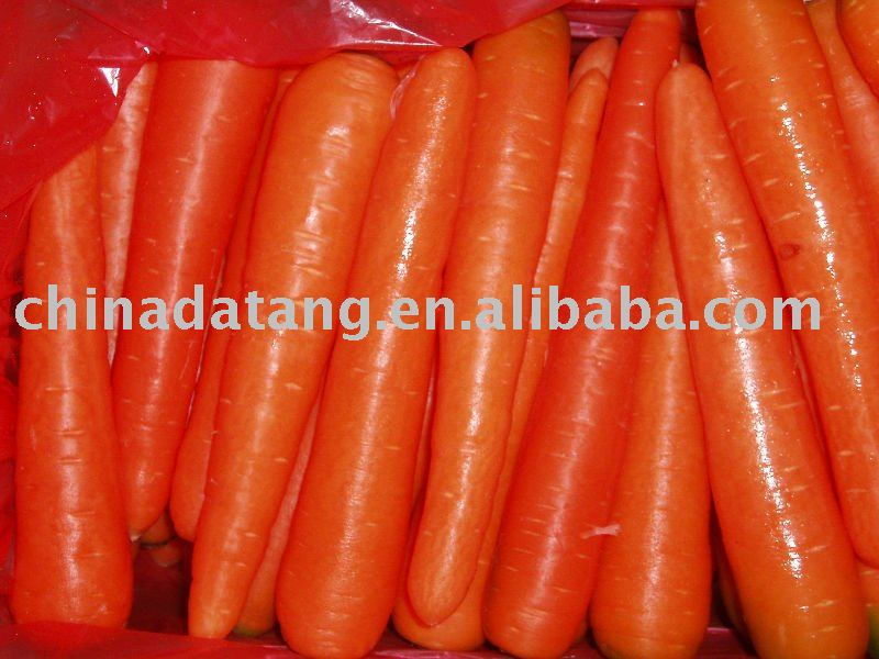 fresh carrot high quality