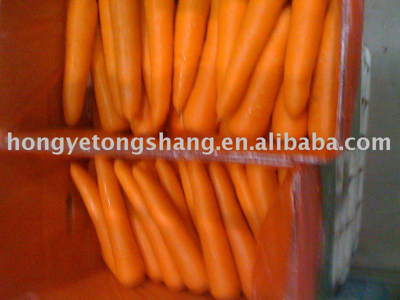 Fresh Carrots Vegetables Import