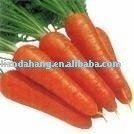 China vegetable, Fresh Vegetable