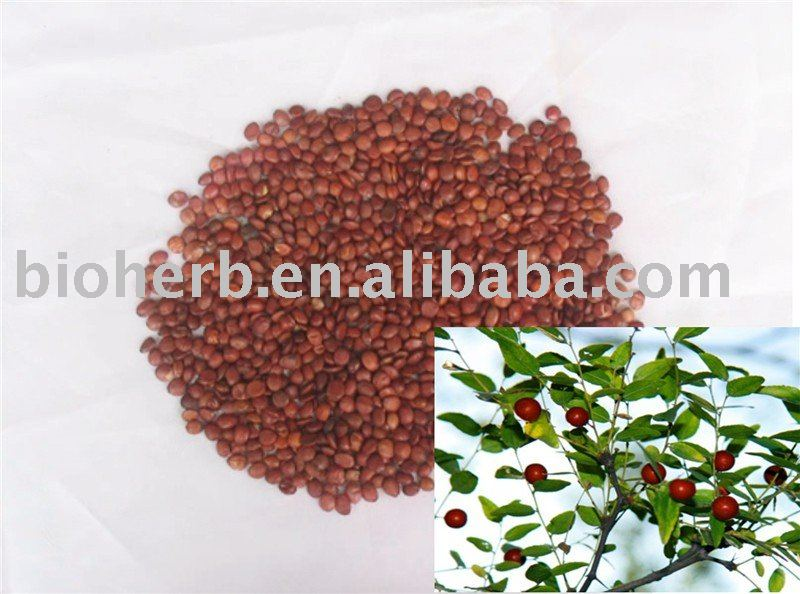 Chinese Fruit- Organic  Dried Fructus Jujubae Date (Da Zao)