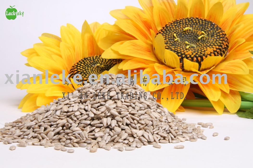 sunflower seeds kernels bird foods grade