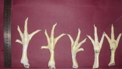 chicken feet for sale frozen
