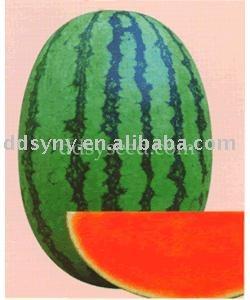 Watermelon seed,watermelon