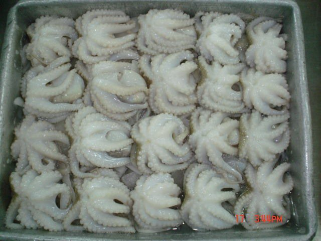 Frozen Baby Octopus Products Vietnam Frozen Baby Octopus