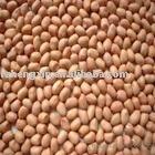 Round type groundnut kernels