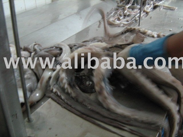 Peruvian Giant Squid Tentacles