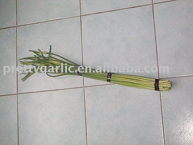 Fresh Garlic Sprout/Stem