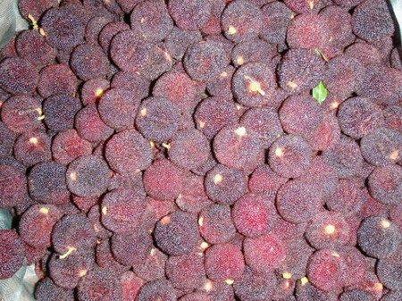 Fresh Tropical Arbutrus for Export to EU