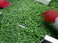 IQF   whole   green   bean s FOR SALE