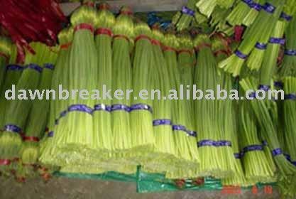 Fresh garlic sprout (garlic sprout / garlic sprouts )