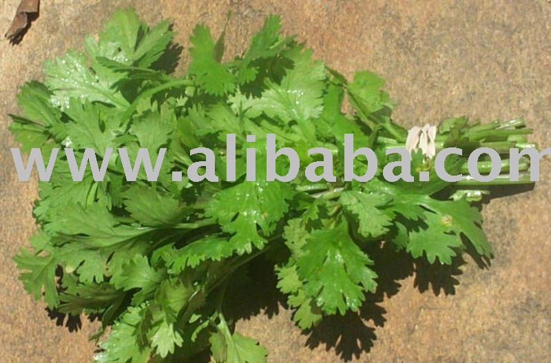 IQF parsley