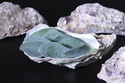 Oyster Leave