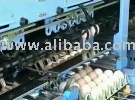 Egg Packing & Automatic Egg Grading Machine