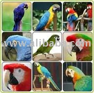 bird eggs and other birds for sale