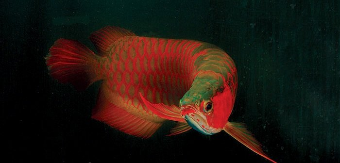 Asian Red arowana Fish and many others for sale