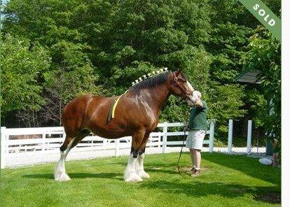 Cypress horses