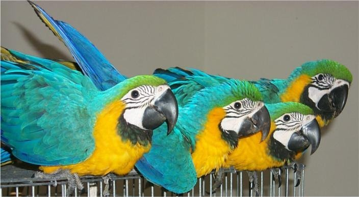 parrots of all types and fertile eggs for sale
