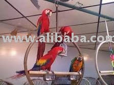 PARROTS and other birds for sale