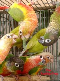 WELL TRAINED PARROTS OF ALL TYPES& EGGS FOR SALE.READY FOR EXPORTATION.
