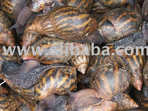 Escargots  snail
