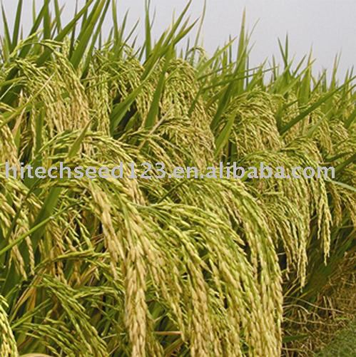 Hejia 3 hybrid rice seed