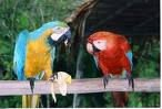 we supply all type of parrots