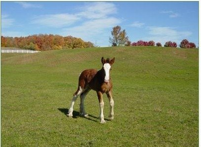 Lady Fiona horses