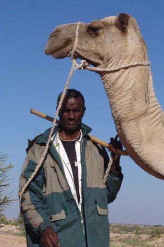 CAMEL (Camelus dromederius) From Kenya