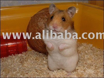 Hamsters products,South Africa Hamsters supplier