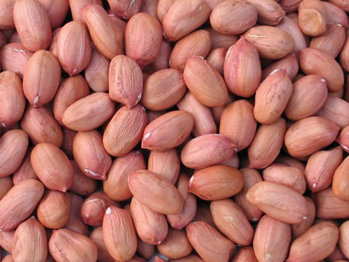 long type groundnut kernels