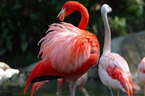 flamingo bird for sale