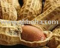 Quality Peanut , Cashew nut , Palm kernel , Sunflower kernel and Cotton seeds for sale