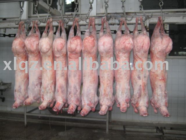 HALAL frozen lamb whole carcass