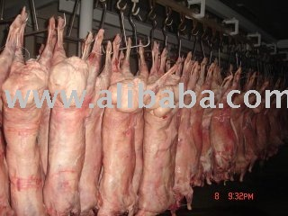 Halal lamb/goat whole carcass