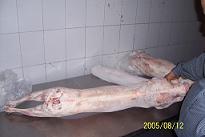 Halal Goat Carcass