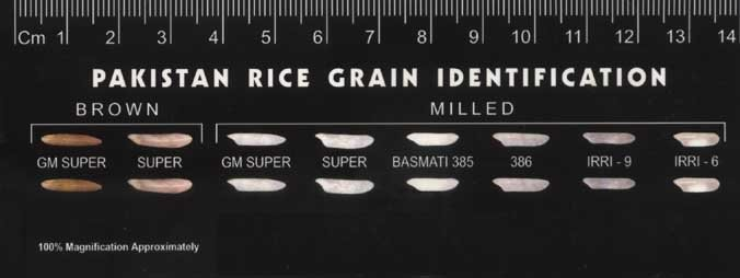 COLOUR SORTED RICE